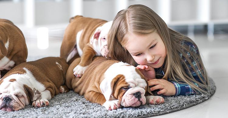 Nuevo producto para mascotas de MGS Seguros