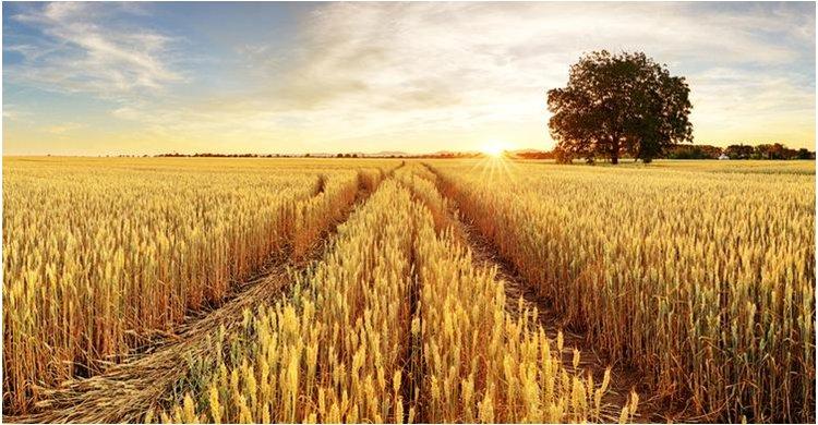 Se aprueba el 41º Plan de Seguros Agrarios Combinados manteniendo un presupuesto de 216,43 millones de euros
