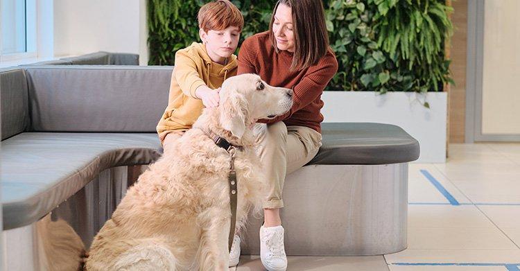 MAPFRE regala un dispositivo de localización en la contratación de su seguro de mascotas